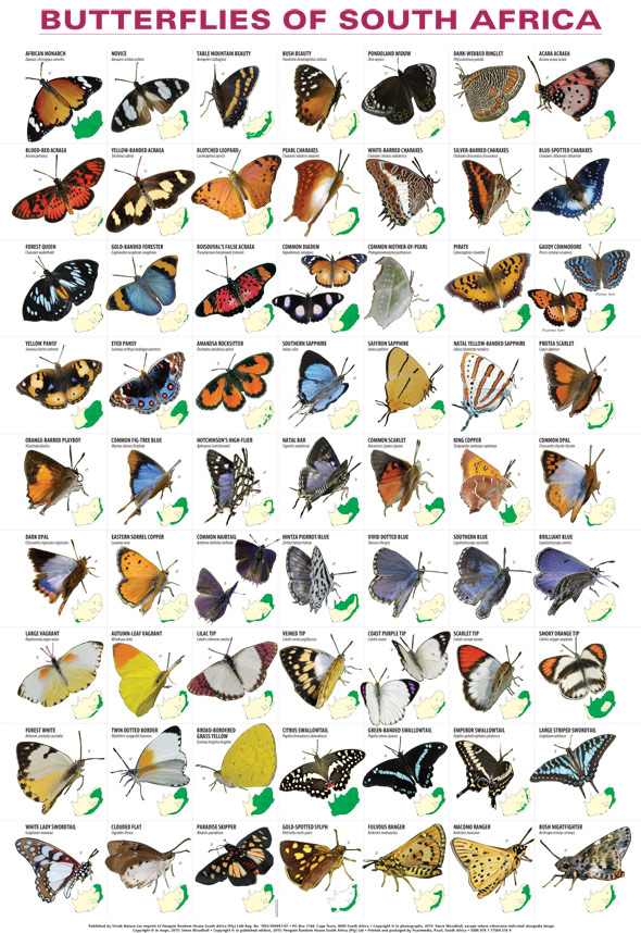 Butterflies of South Africa Poster