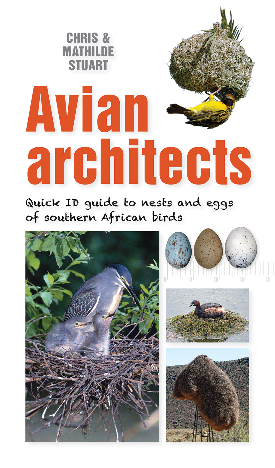Avian Architects: Quick ID guide to nests and eggs of southern African birds