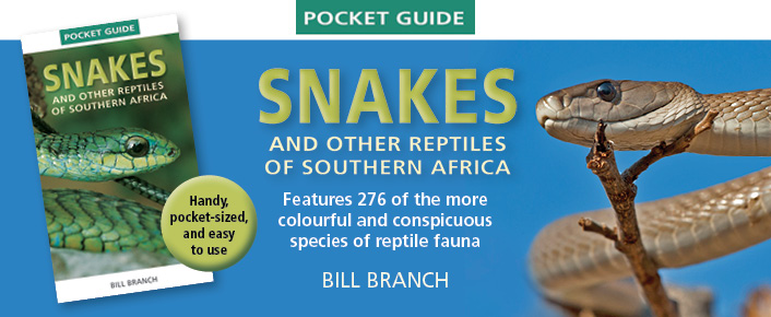 PG Snakes and other reptiles